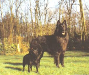 Yoyo et Laïka